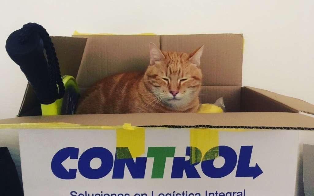 Mudanzas con gato