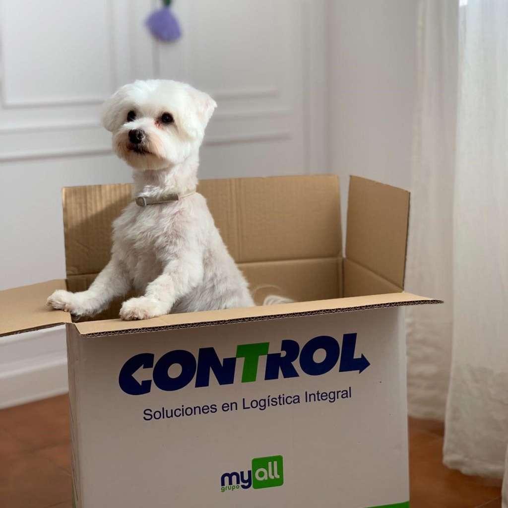 mudanza con perros